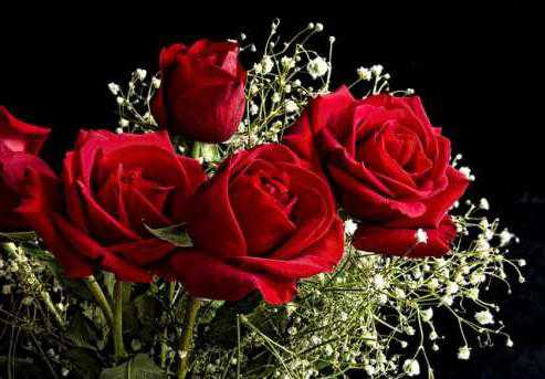 Как вырастить розу из черенка из букета дома