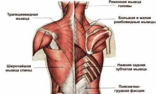 Если появилась боль под левой лопаткой, как можно заподозрить сердечную патологию