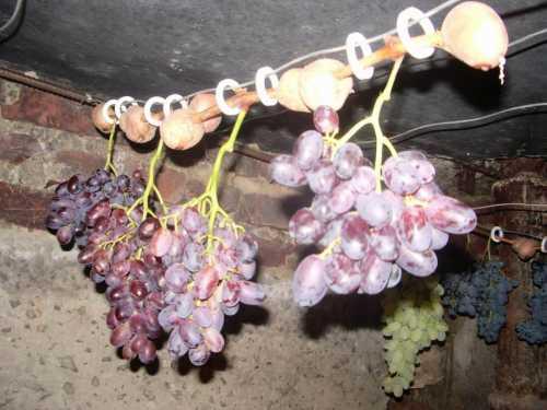 Как  хранить виноград в домашних условиях, как