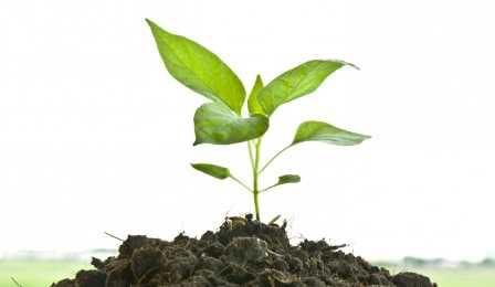 Рассада Как вырастить хорошую рассаду