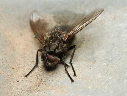 Как избавиться от мух в доме, что поможет и что